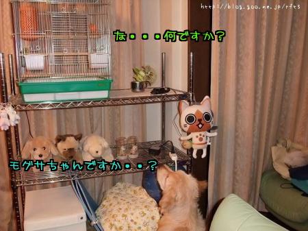 DSCF2739_convert_20101226115046.jpg
