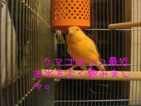 tori4_convert_20100323204502.jpg