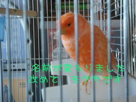 tori5_convert_20100321183859.jpg