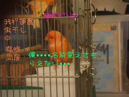 tori6_convert_20100321185104.jpg