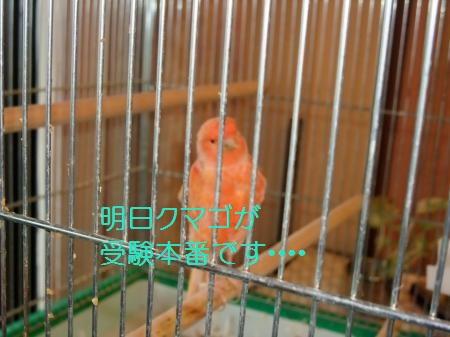 yomogi+002_convert_20110209183610.jpg
