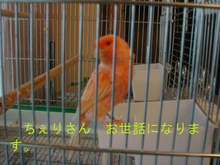 yomogi+006_convert_20100618180259.jpg