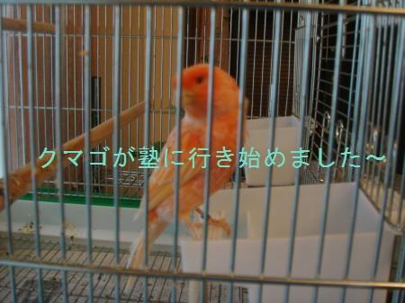 yomogi+006_convert_20100722215544.jpg