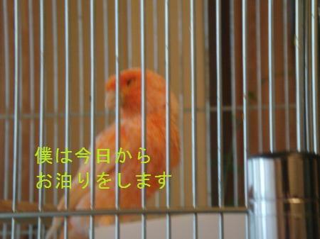 yomogi+007_convert_20100618175319.jpg