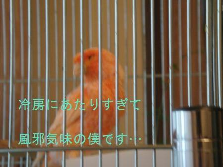 yomogi+007_convert_20100722214352.jpg