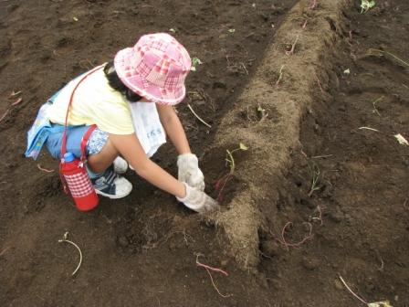 2008.09.20-芋掘り