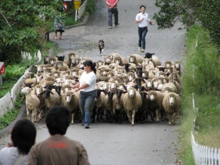 2008.09.20-羊の大行進