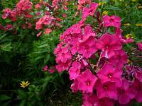 紫竹ガーデン 6