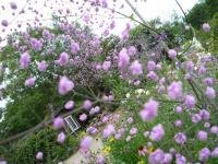 紫竹ガーデン 12