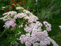 紫竹ガーデン 8