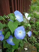紫竹ガーデン 15