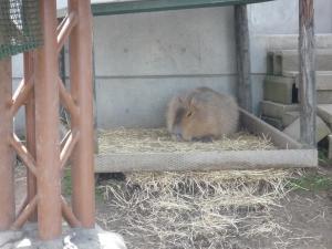 動物園 6
