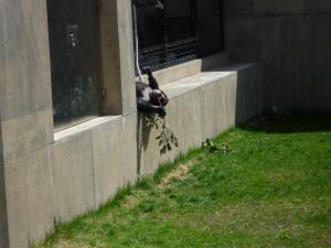 動物園 4