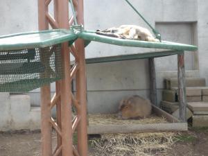 動物園 7