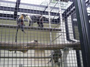 円山動物園 3