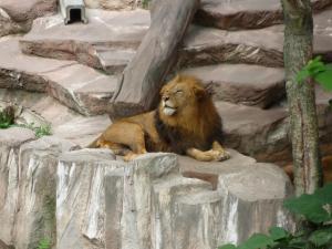 円山動物園 12
