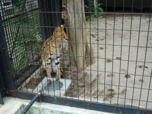 円山動物園 18