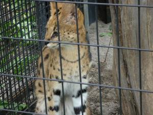 円山動物園 17