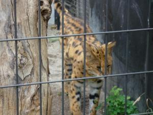 円山動物園 15