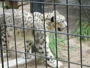 円山動物園 14