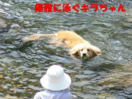 優雅に泳ぐキラちゃん