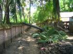 道を塞ぐ木 バガン