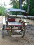 ミャンマー 馬車