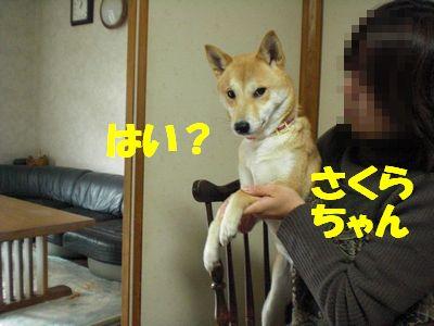 CIMG0121.jpg