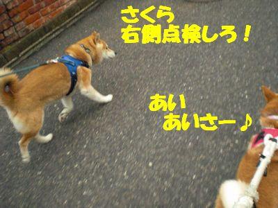 CIMG0511.jpg