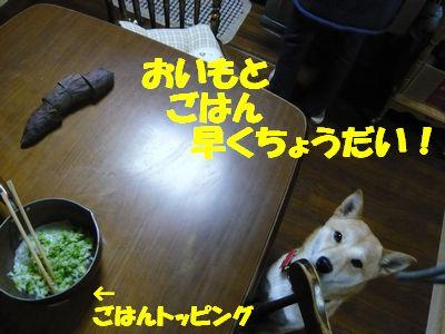P1100665.jpg