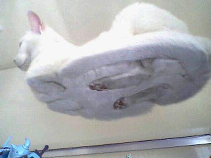 ネコの仕組み