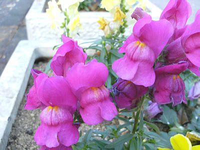 植え込みのお花