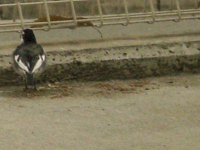 Jスコ エントランスの鳥さん