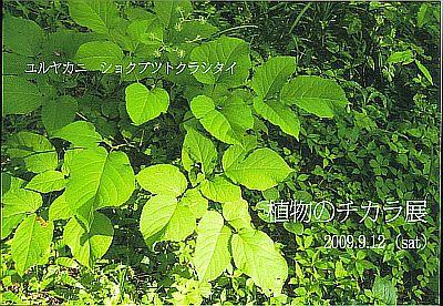 植物のチカラ展_表 ゆうど2