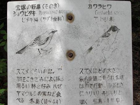 宝塚の野鳥