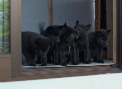 ryumama-puppies.jpg
