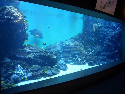 大型サンゴ水槽全景
