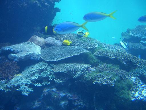 テーブル珊瑚2