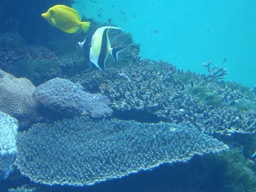 テーブル珊瑚3