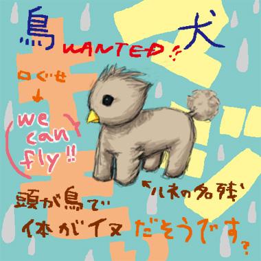 bird-dog.jpg