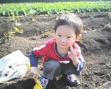 芋掘り-1
