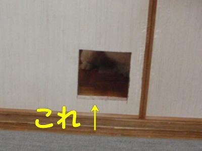 P8150081.jpg