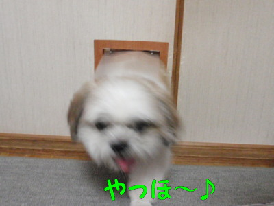 P8170120.jpg