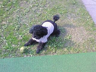 城山公園でボール遊び