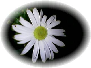 20051110205412