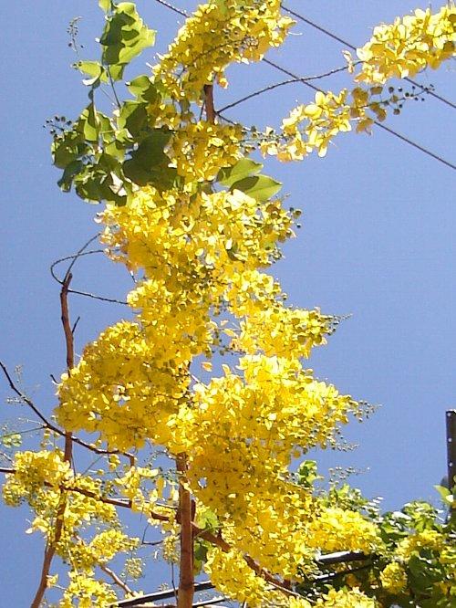 2005-golden-002.jpg