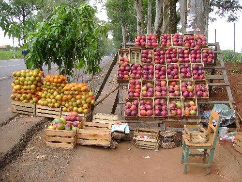 mango-1.jpg