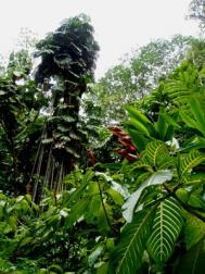 15_tropical.forest.jpg