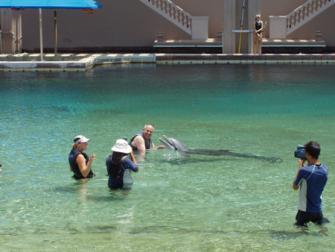 17_dolphin.jpg