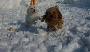 雪の上でかけっこ
